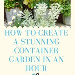 How to Create a Stunning Container Garden in an Hour