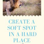 Create A Soft Spot in a Hard Place