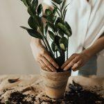 Revamping Your Garden Naturally
