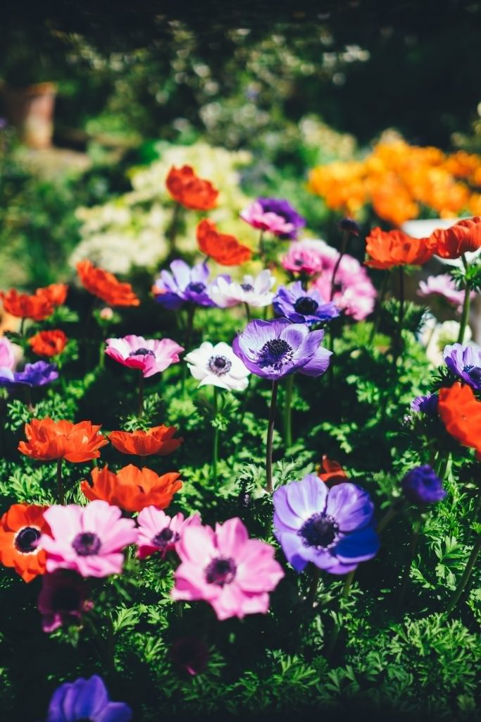 How To Keep Your Garden Maintained When You Don't Have Much Spare Time
